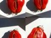 4-tomates